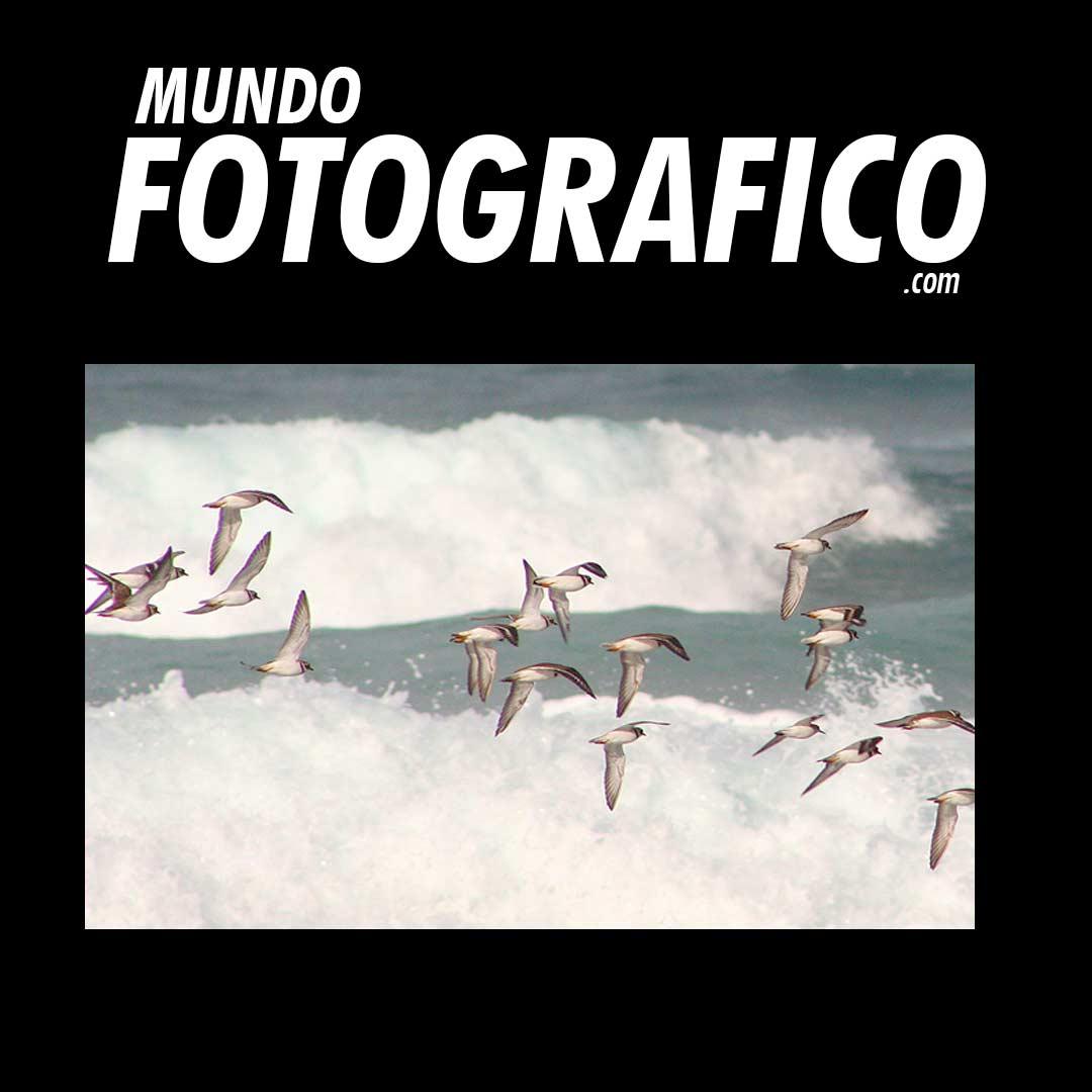 MundoFotografico.Com