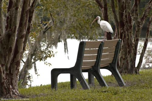 thornbill-en-asiento